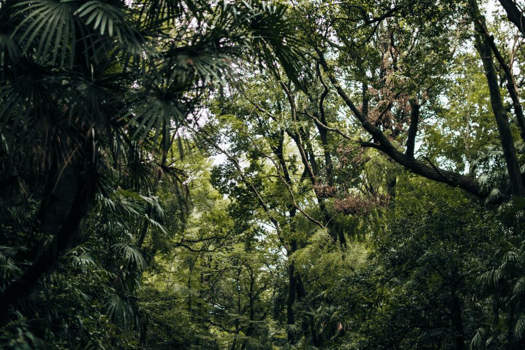 Todoroki Valley trees