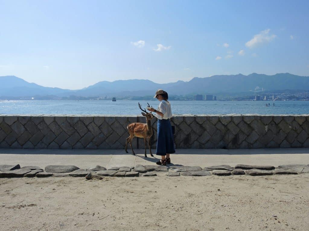 deers at Miyajima island